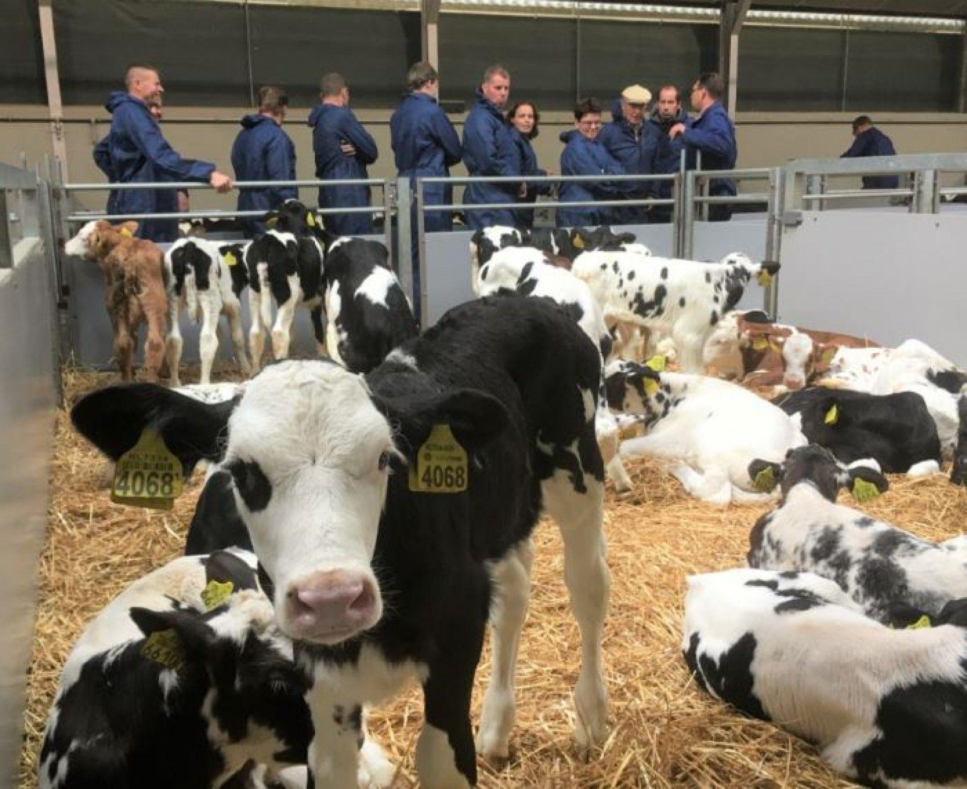 Obligaties voor nieuwe locatie veemarkt Leeuwarden