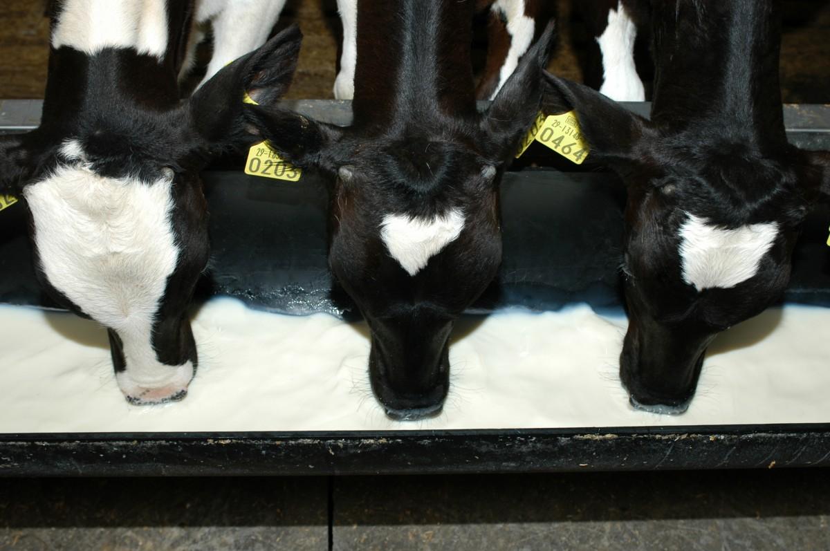 Regeling diergeneesmiddelen iets aangepast: zelfcontrole verplicht